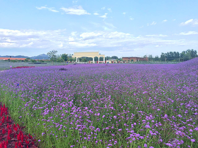 紫云水岸薰衣草庄园