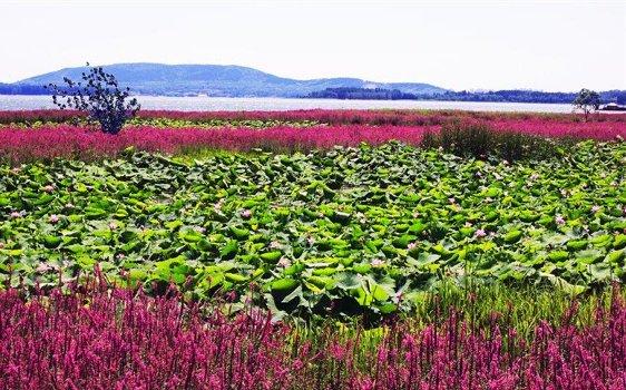 紫云水岸风景区